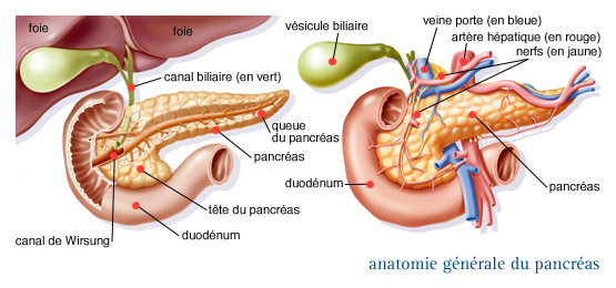 447_popup_anatomie-generale-du-pancreas-3044508-3044608